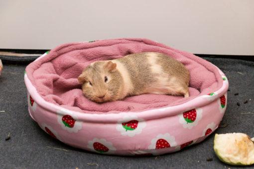 fleecebettchen meerschweinchen