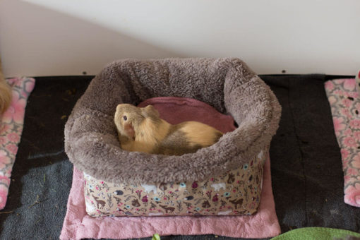 fleeceprodukte für meerschweinchen