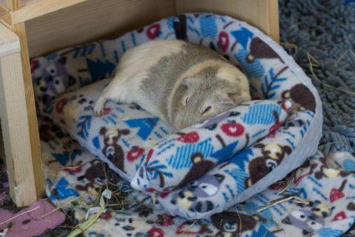 sofa für meerschweinchen