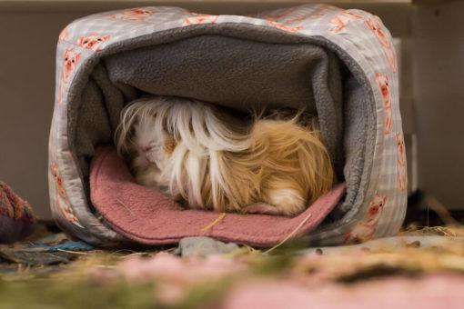 kuschelhöhle schweinchen