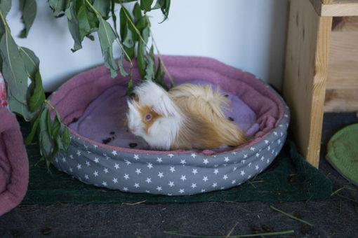 meerschweinchen sitzt in fleecebettchen