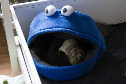meerschweinchenhöhle krümelmonster
